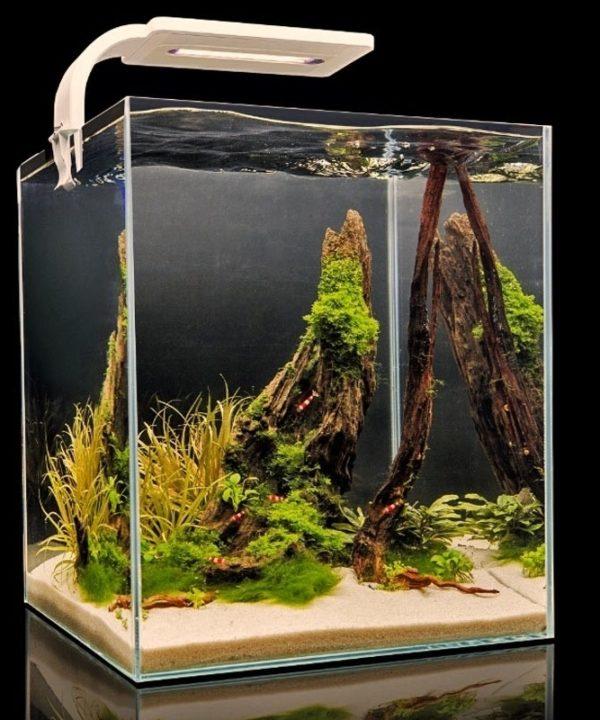 Aquarium Shrimp Set 30
